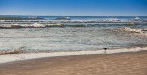 Salty Mermaid Oceanfront Hotel